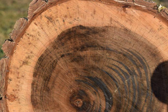 Fibra-lemn-Bio-Ferestre-mic Material lemn